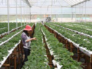 Hơn 100.000 tỷ đồng cho vay nông nghiệp sạch